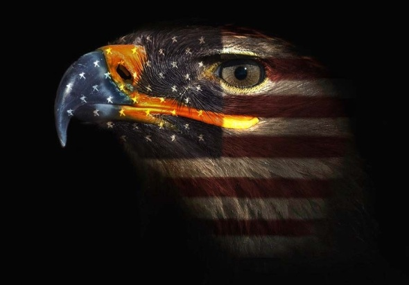 Eagle-with-American-Flag-58271