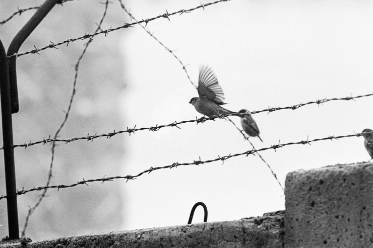 Birds on barbed wire strung atop the Berlin Wall, 1962 | I hope to ...