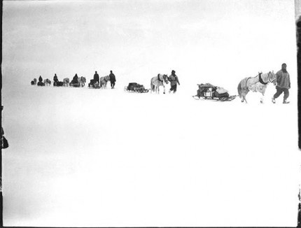 Captain Scott's ponies on the march, Great Ice Barrier, 2 Dec 1911