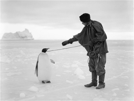 Captain Robert Falcon Scott's Terra Nova Expedition to the Antarctic