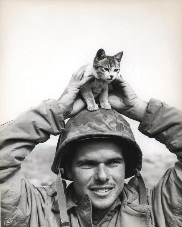 Marine Cpl. Edward Burckhardt found this kitten at the base of Mount Suribachi, Iwo Jima, the scene of some of the most brutal fighting of the war. March, 1945 [819 x 1024]