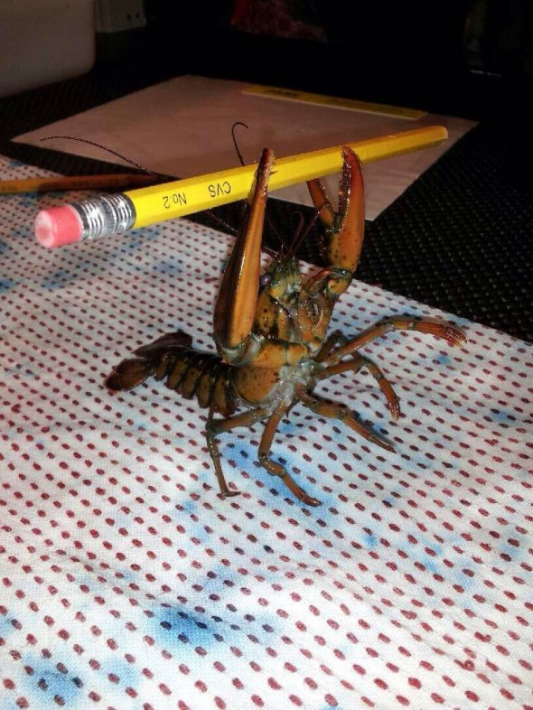 Lobster offering a pencil to the Gods.