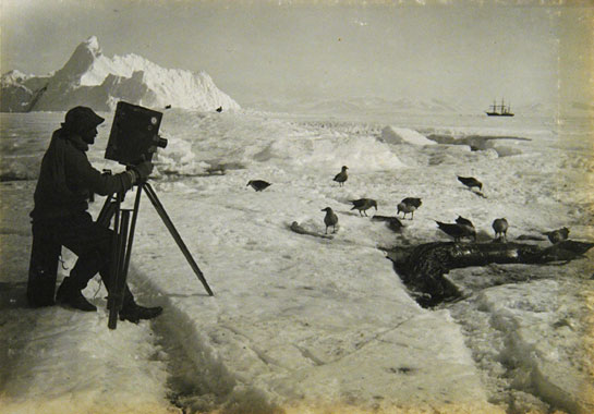 Herbert Ponting photographing a skua