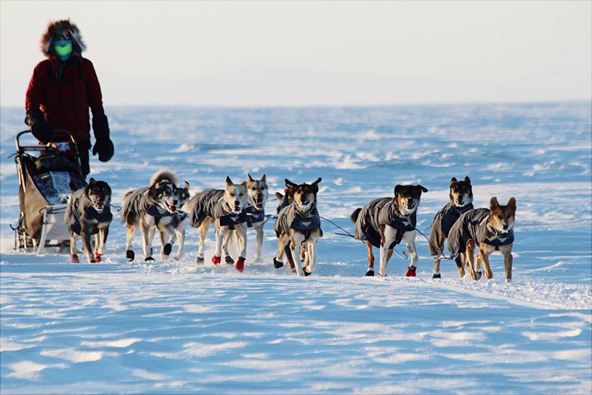 When was the first Iditarod race run - Answerscom