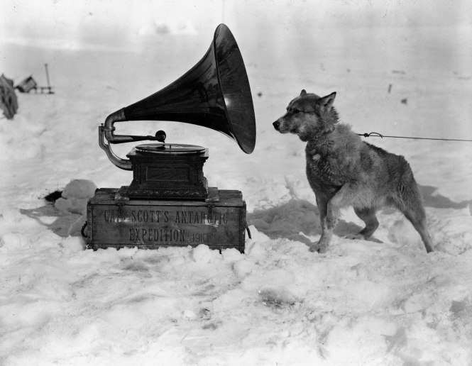 """Dog Chris, listening to the gramophone, Antarctica"" - photograph taken in January 1911 by Herbert Ponting, Robert Falcon Scott's official photographer for the the Terra Nova Expedition"