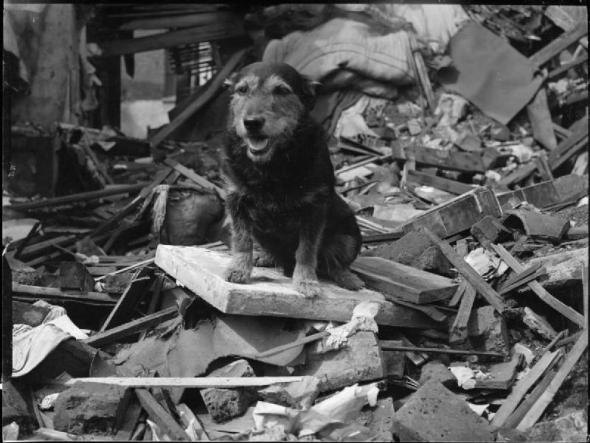 Rip_Dicken_Medal_Dog_IWM_D_5937
