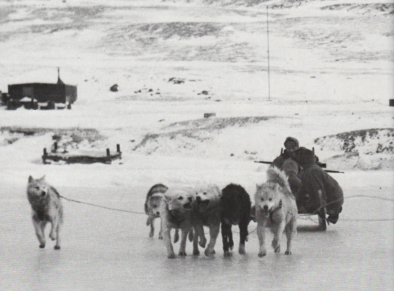 sled dogs i hope to be remembered for my atrocities