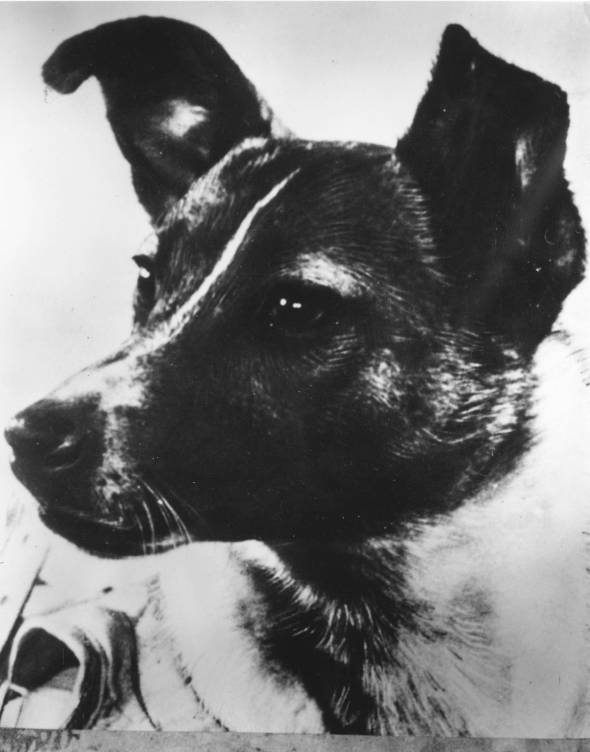 Laika, the first dog in space... the first animal to die in orbit.