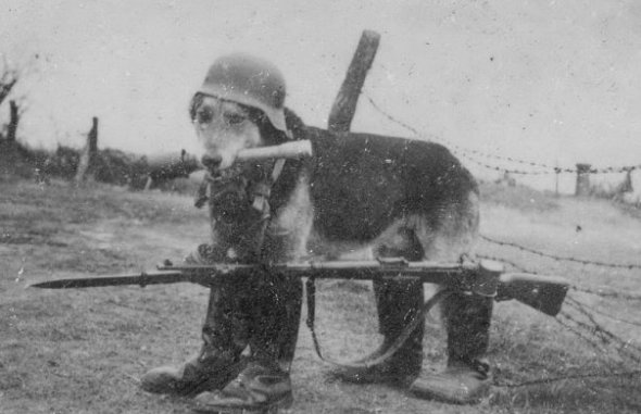 How bored were soldiers on the front lines in WWI and WWII that they had time to take cute pics of dogs?